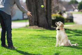 What S The Best Dog Training Collar For You The Pros And Cons Of Different Dog Collars Petsafe Articles