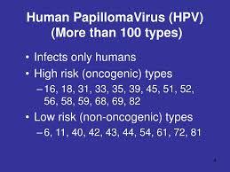 ppt human papilloma virus powerpoint