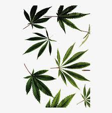 supreme weed wallpaper hd