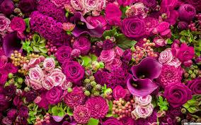 belas flores rosadas bando hd wallpaper