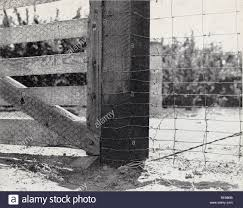 Controlling Field Rodents In California Rodents Mammals Fig 25 Rabbitproof Fence And Gate Bottom Of Fence Wire Is Buried 6 Inches Or More And Lower Meshes Should Not Be More Than