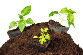 what is peat moss what is it used for