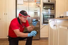 Get Black Ant Infestation In Kitchen  Pictures