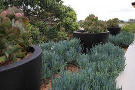hard to kill balcony plants houzz au