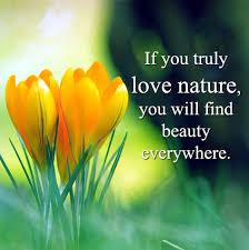 nature dp for whatsapp status slogan