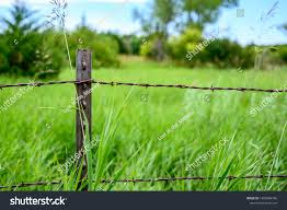 Metal T Post Barbed Wire Fencing Stock Photo Edit Now 1450084796