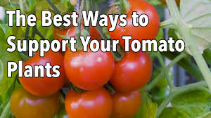 Tomato Cages How To Make Supports For Healthier Tomato Plants Youtube