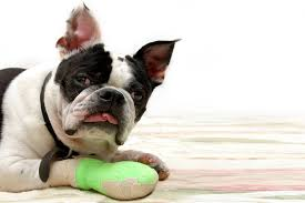 how to keep bandages on a dog lovetoknow