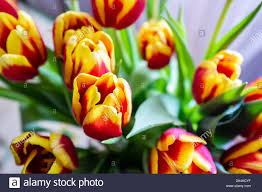 Primo Giorno Di Primavera Immagini & Primo Giorno Di Primavera ...