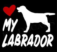 Love My Labrador High Quality Vinyl Decal For Car Bumper Window Laptop Wall Mugs Ebay