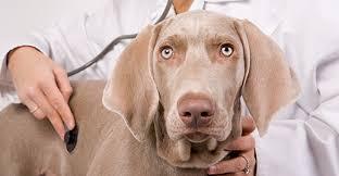 Veterinarians : Banfield Pet Hospital® provides superior pet ...