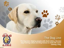Find Affordable Best Electric Dog Fence The Dog Line