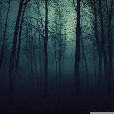dark forest ultra hd desktop background
