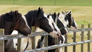 Make some new friends at Redwings Ada Cole! | Redwings Horse Sanctuary and  Equine Veterinary Centre