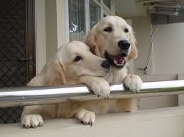 7 Things You Need To Do To Dog Proof Your Balcony Natural Dog Owner
