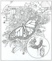 Kids N Fun Kleurplaat Natuur Rondom Het Huis Vlinders