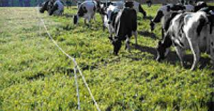 Temporary Fencing For Controlled Grazing Beef Magazine