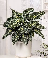 34 poisonous houseplants for dogs