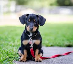 18 best mixed breed dogs cutest breed