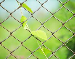 3 Customization Ideas For Chain Link Fences David S Fencing Ewa Nearsay