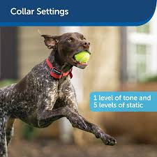 From The Parent Company Of Invisible Fence Brand Petsafe Stay Play Wireless Fence For Stubborn Dogs Above Ground Electric Pet Fence