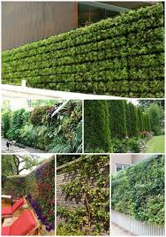 15 Living Privacy Fences Living Privacy Fences Green Fence Fence Landscaping