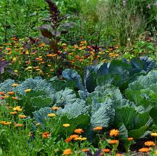 vegetables and fruits to grow this fall
