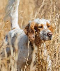 adverse reactions in dogs purina