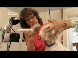 wiry hair dog grooming demonstration