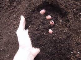 natural and enrich soil potting soil