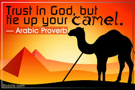 wonderfully witty quotes and sayings about camels quotabulary