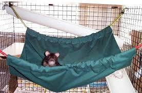 rat rat hammock