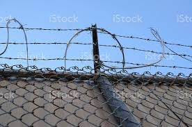 Barbed Wire On Security Fence And Blue Sky Stock Photo Download Image Now Istock