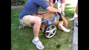wheelchair for dogs using pvc you