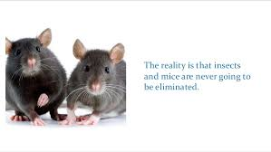 6 Reasons to Have Monthly Pest Control Service