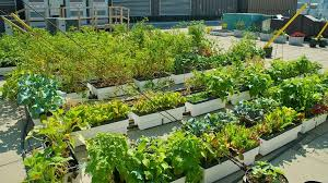 rooftop vegetable gardens ideas