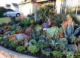 cactus garden design masonhomedecor co