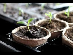how to start seeds indoors you