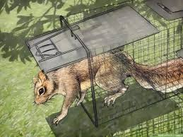 how to catch a squirrel 11 steps with