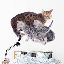 Bengal Kitten And Mother Wall Decal Wallmonkeys Com