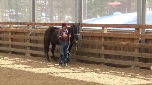 Trailer Loading Inspired Horseman Online Education