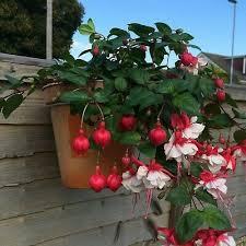 6 Fence Hooks Plant Pot Hanger Holder Ring Hang Flower Pots On Fences Railing Ebay