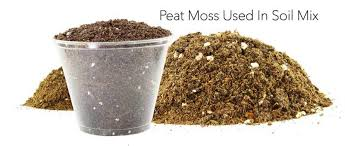 what is peat moss how to best use