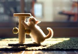 cats scratch the carpet and how to stop