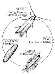 get rid of carpet moths information on