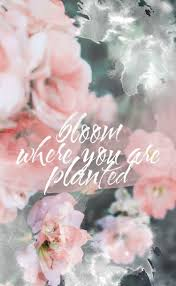 flower quotes hd backgrounds