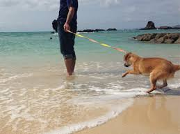 12月の沖縄、海で泳げるか?|沖縄の冬の海について