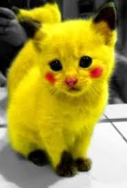 Parce que des animaux déguisés, c'est vraiment cute ...