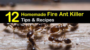 12 do it yourself fire ant