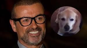 George Michael fans' heartache as singer's dog Abby dies - Heart